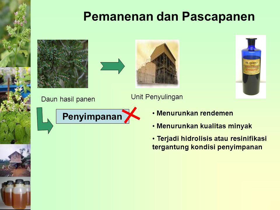 Pemanenan dan Pascapanen
