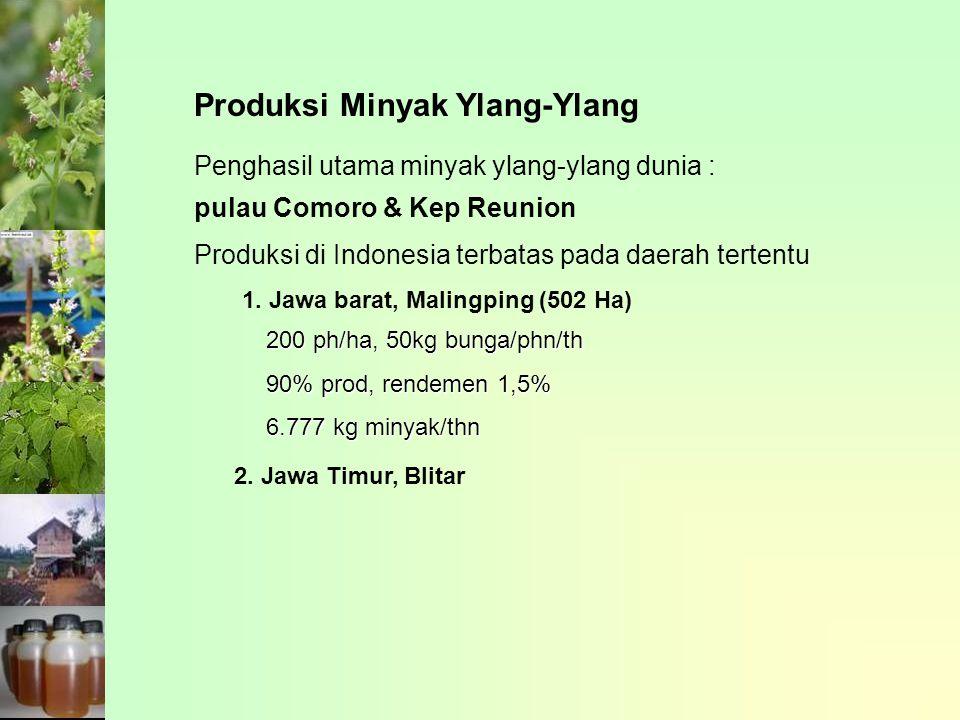 Produksi Minyak Ylang-Ylang
