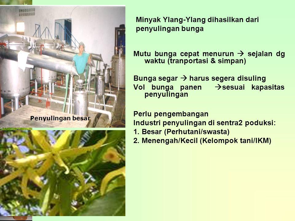 Minyak Ylang-Ylang dihasilkan dari penyulingan bunga