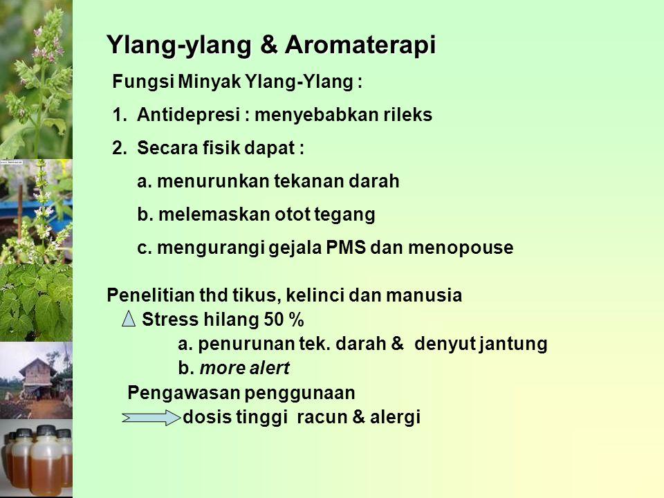 Ylang-ylang & Aromaterapi