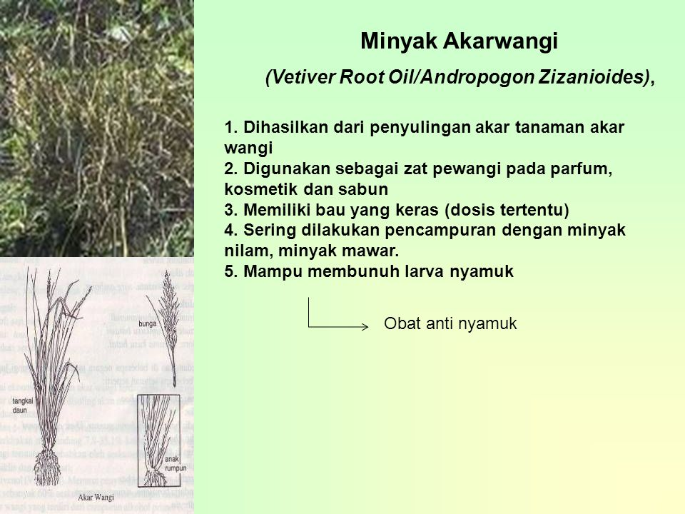 (Vetiver Root Oil/Andropogon Zizanioides),