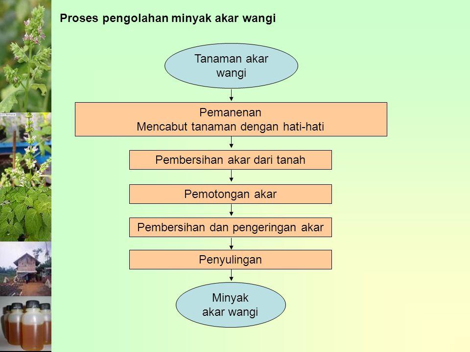 Proses pengolahan minyak akar wangi