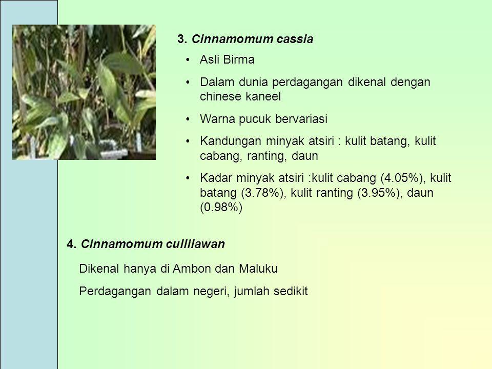 3. Cinnamomum cassia Asli Birma. Dalam dunia perdagangan dikenal dengan chinese kaneel. Warna pucuk bervariasi.