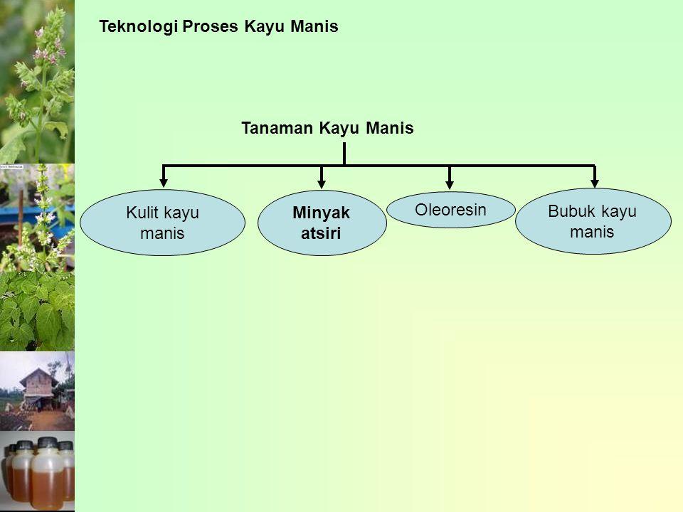 Teknologi Proses Kayu Manis