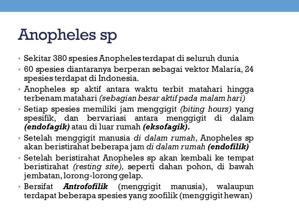 Anopheles sp Sekitar 380 spesies Anopheles terdapat di seluruh dunia