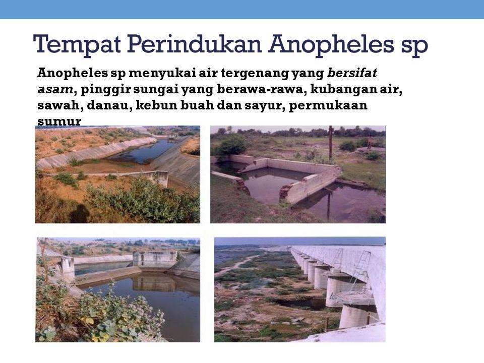 Tempat Perindukan Anopheles sp