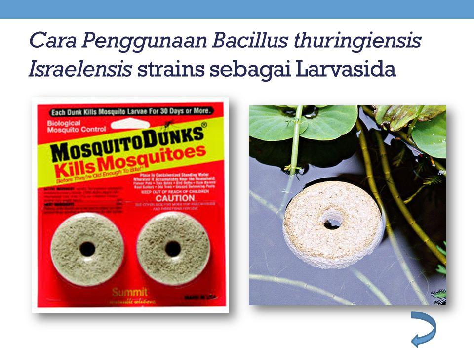 Cara Penggunaan Bacillus thuringiensis Israelensis strains sebagai Larvasida