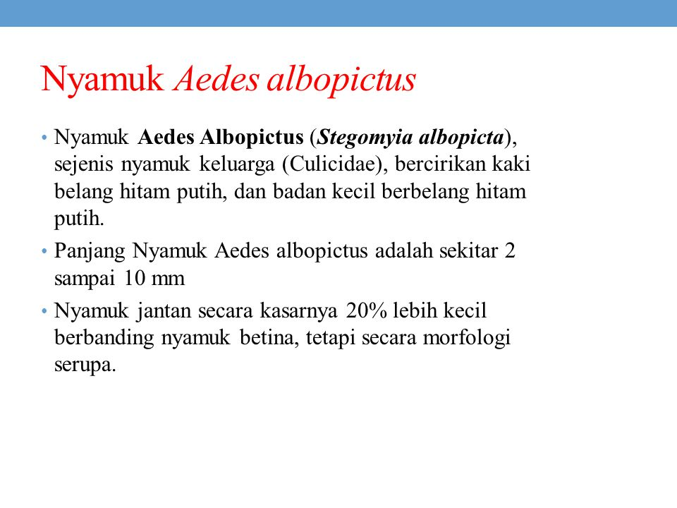 Nyamuk Aedes albopictus