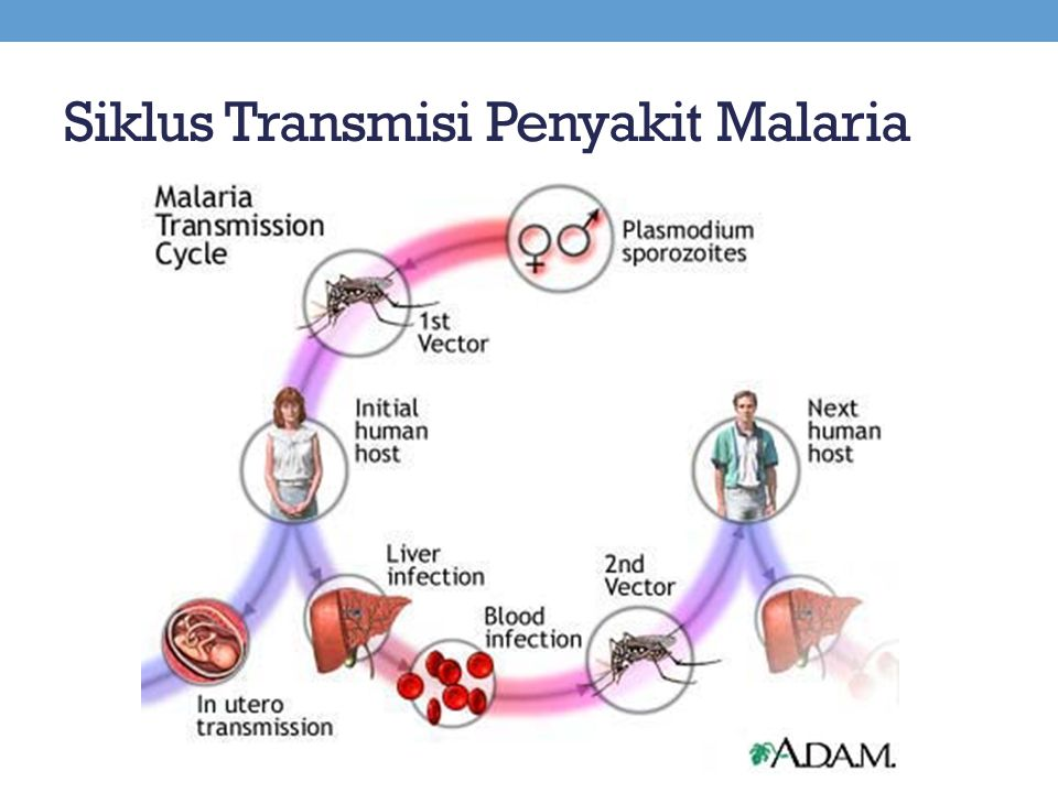Siklus Transmisi Penyakit Malaria
