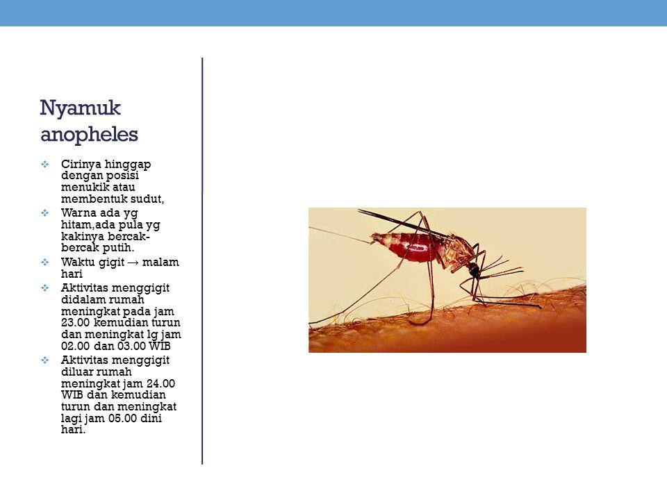 Nyamuk anopheles Cirinya hinggap dengan posisi menukik atau membentuk sudut, Warna ada yg hitam,ada pula yg kakinya bercak-bercak putih.