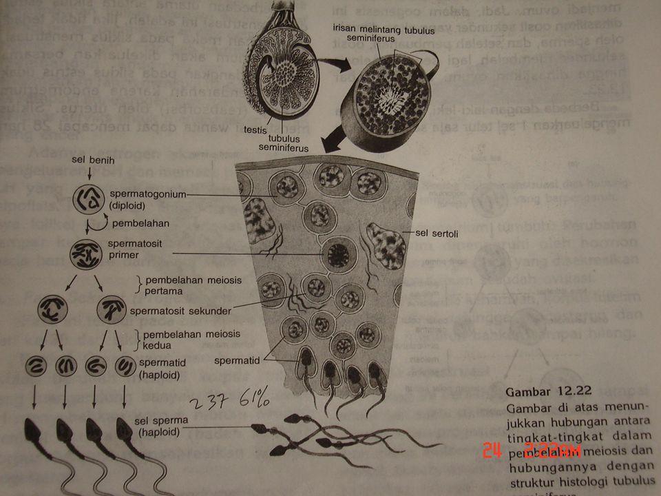 Biologi SMA N 1 Pekalongan 2006