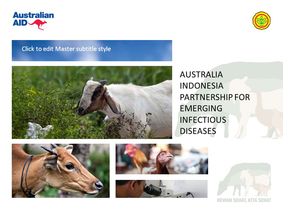 AUSTRALIA INDONESIA PARTNERSHIP FOR EMERGING INFECTIOUS DISEASES