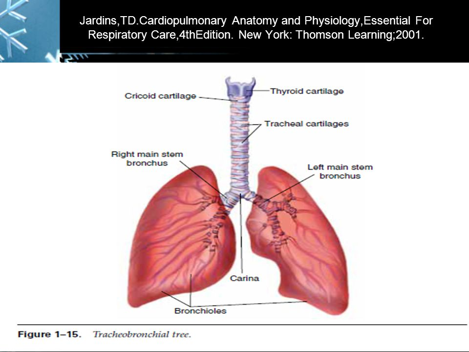 Jardins,TD.Cardiopulmonary Anatomy and Physiology,Essential For Respiratory Care,4thEdition.
