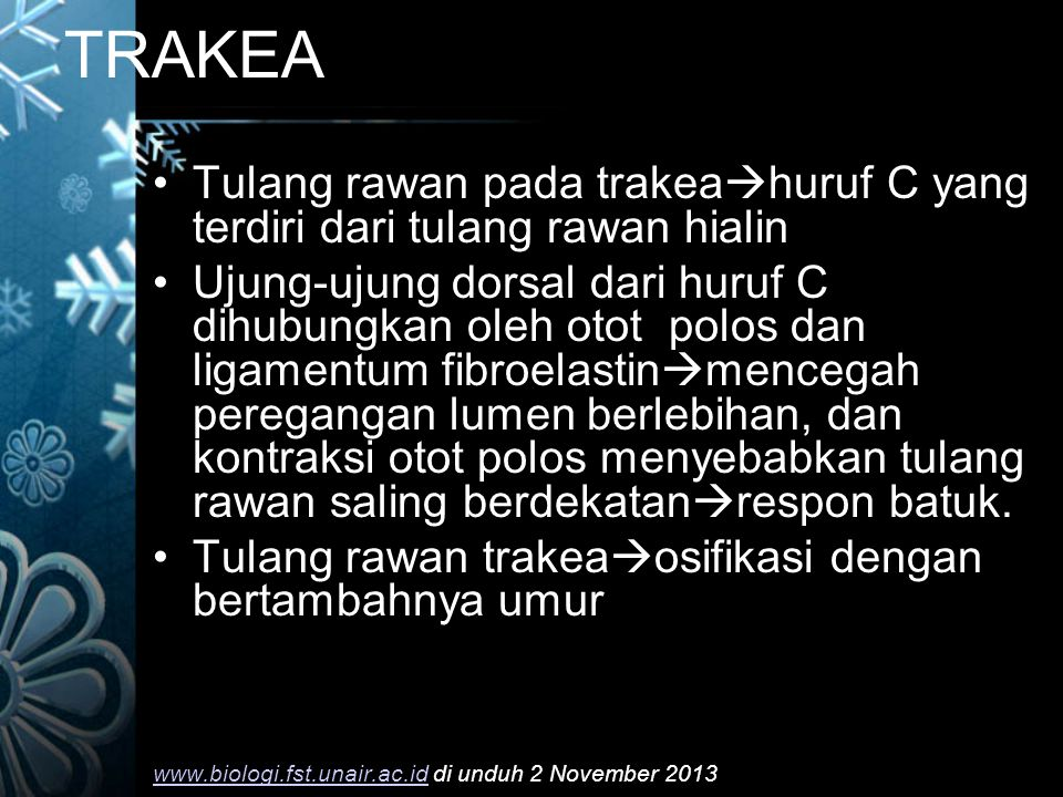 TRAKEA Tulang rawan pada trakeahuruf C yang terdiri dari tulang rawan hialin.