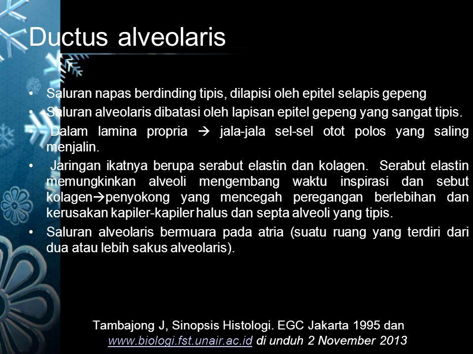 Ductus alveolaris Saluran napas berdinding tipis, dilapisi oleh epitel selapis gepeng.