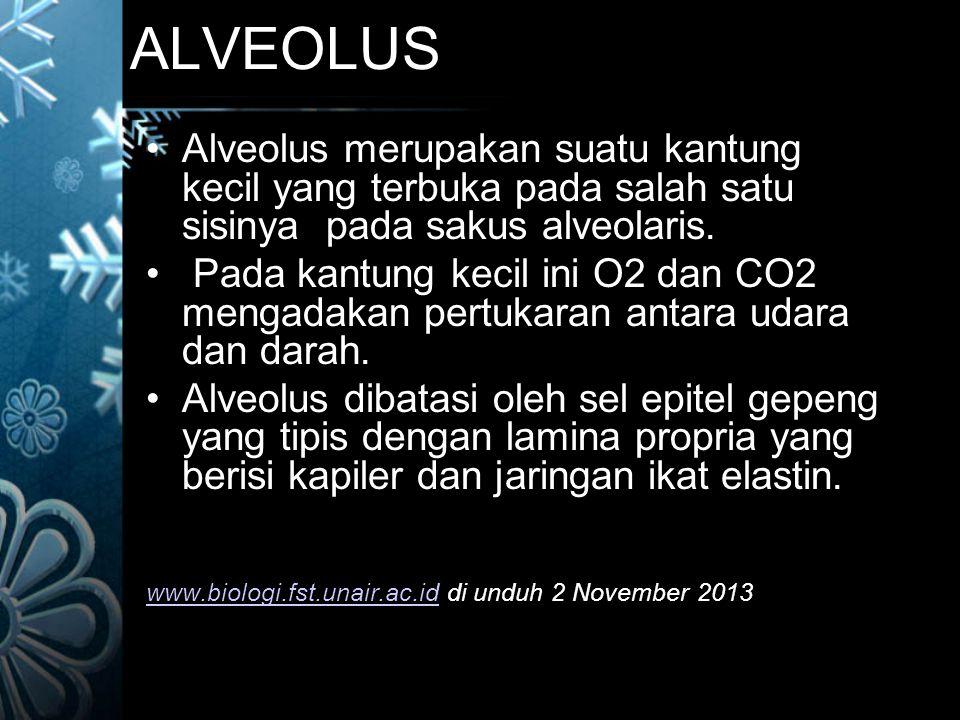 ALVEOLUS Alveolus merupakan suatu kantung kecil yang terbuka pada salah satu sisinya pada sakus alveolaris.