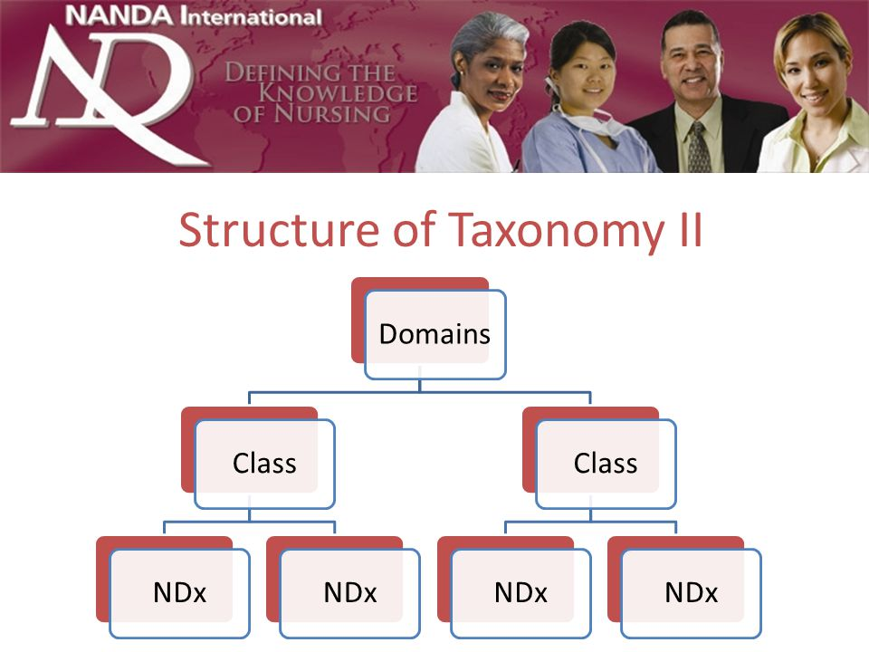 Structure of Taxonomy II