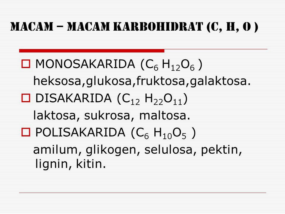 MACAM – MACAM KARBOHIDRAT (C, H, O )