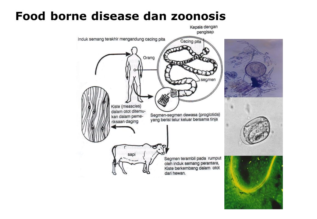 Food borne disease dan zoonosis