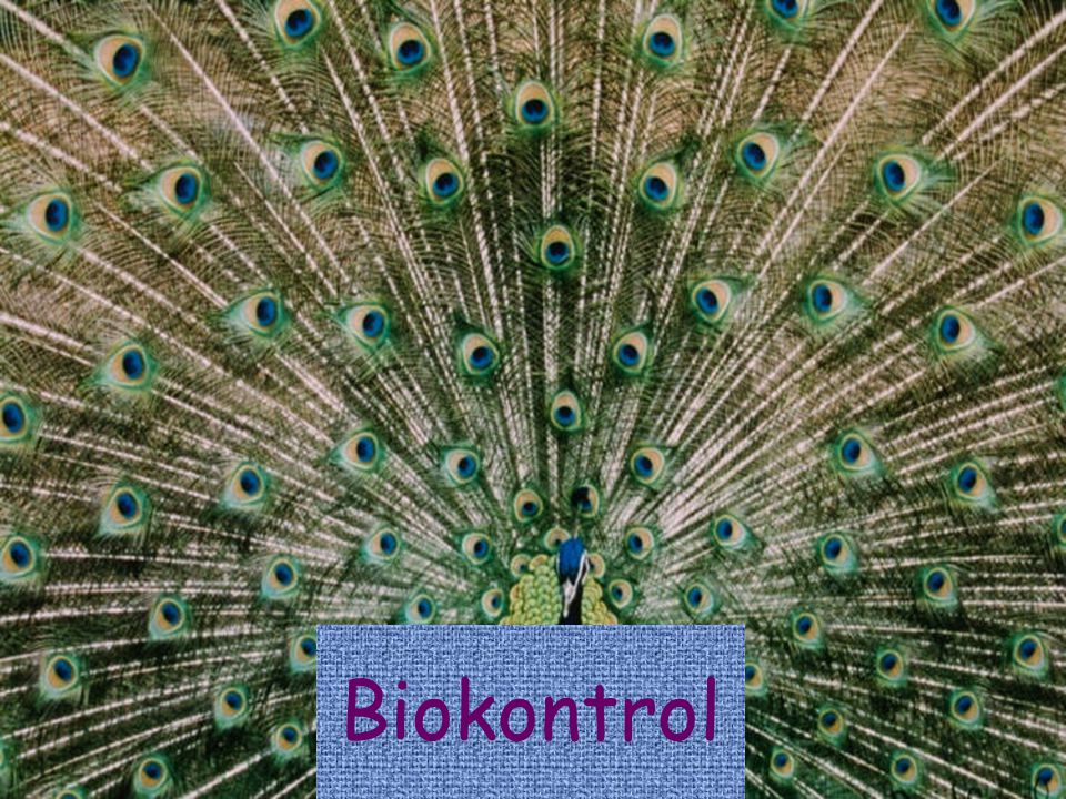 Biokontrol