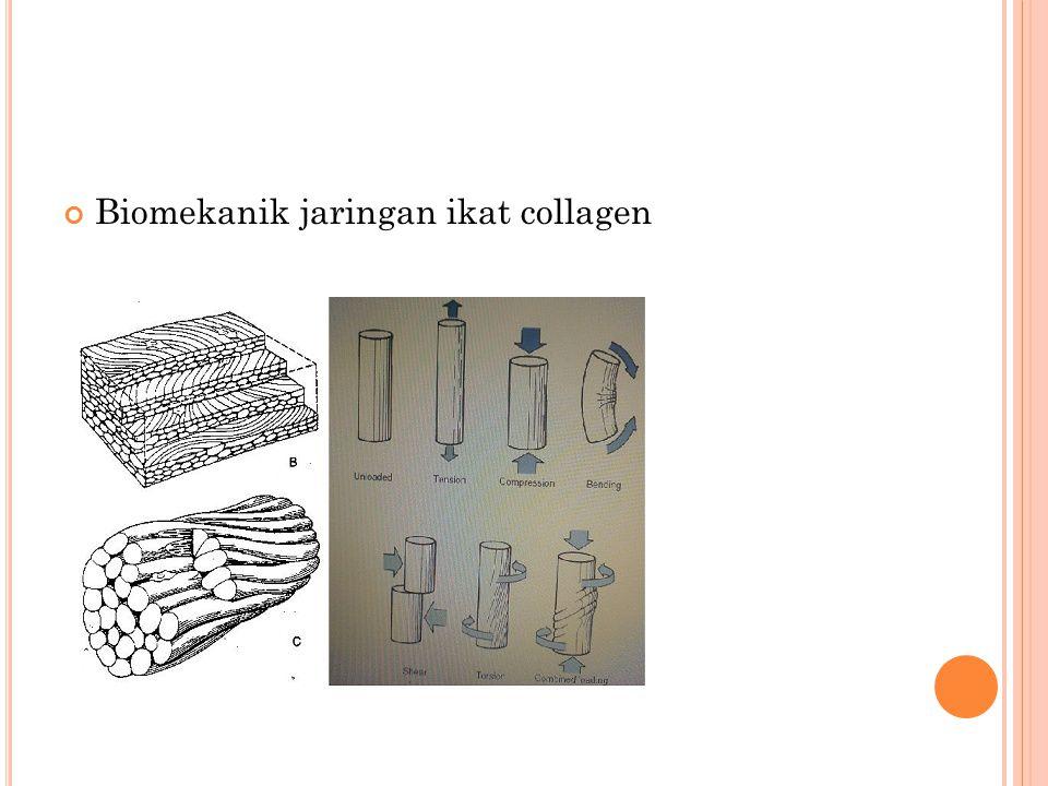 Biomekanik jaringan ikat collagen