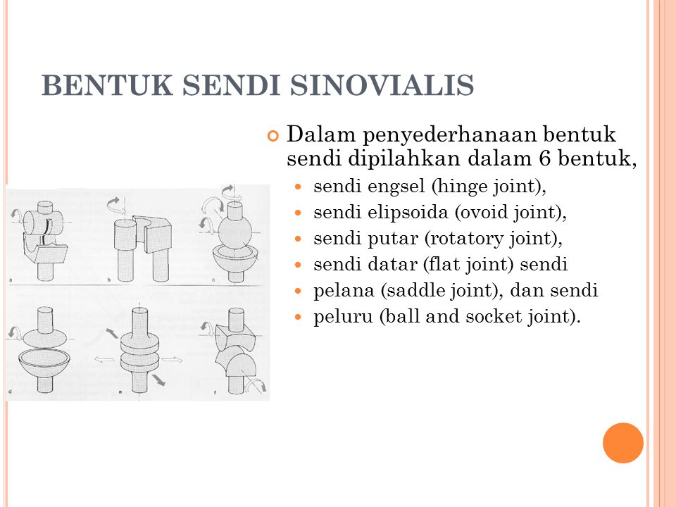 BENTUK SENDI SINOVIALIS