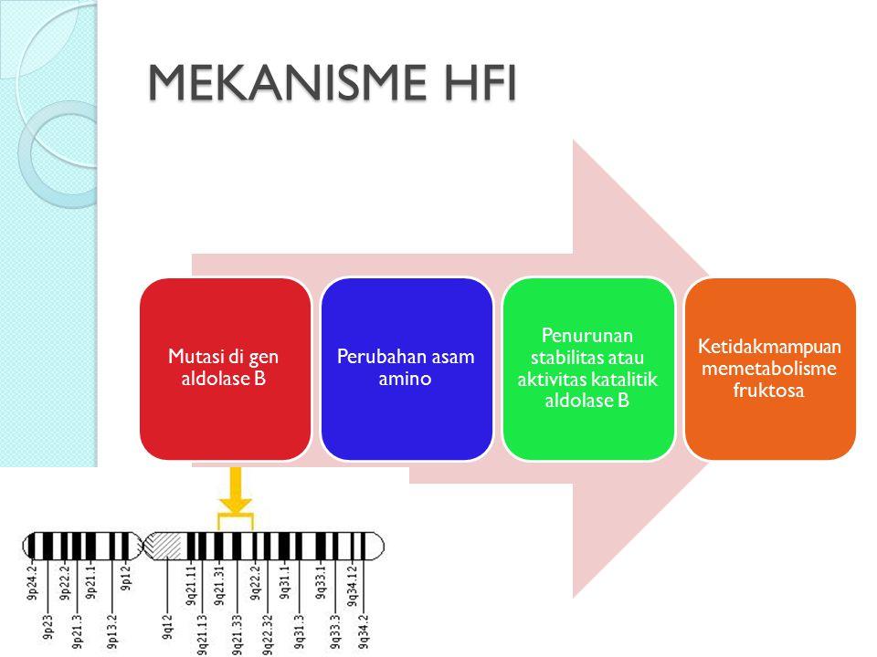 MEKANISME HFI Mutasi di gen aldolase B Perubahan asam amino