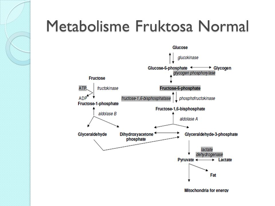 Metabolisme Fruktosa Normal