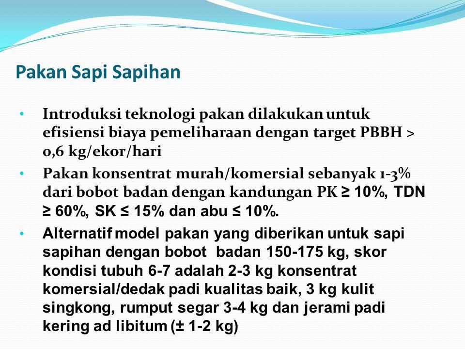 Pakan Sapi Sapihan Introduksi teknologi pakan dilakukan untuk efisiensi biaya pemeliharaan dengan target PBBH > 0,6 kg/ekor/hari.