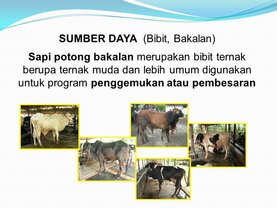 SUMBER DAYA (Bibit, Bakalan)