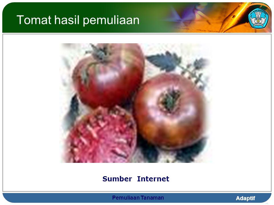 Tomat hasil pemuliaan Sumber Internet Pemuliaan Tanaman
