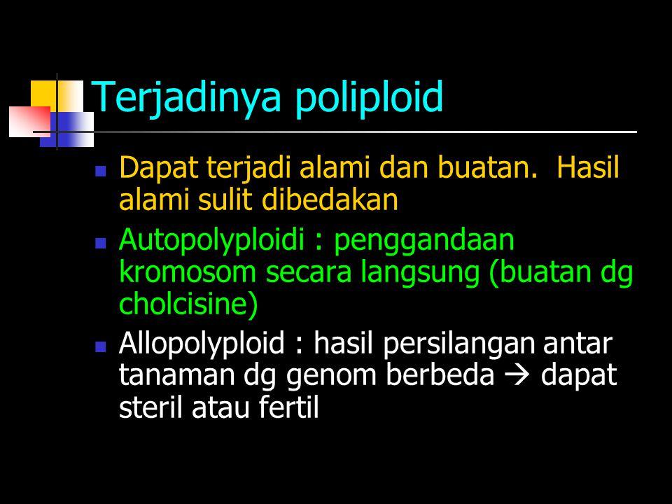 Terjadinya poliploid Dapat terjadi alami dan buatan. Hasil alami sulit dibedakan.