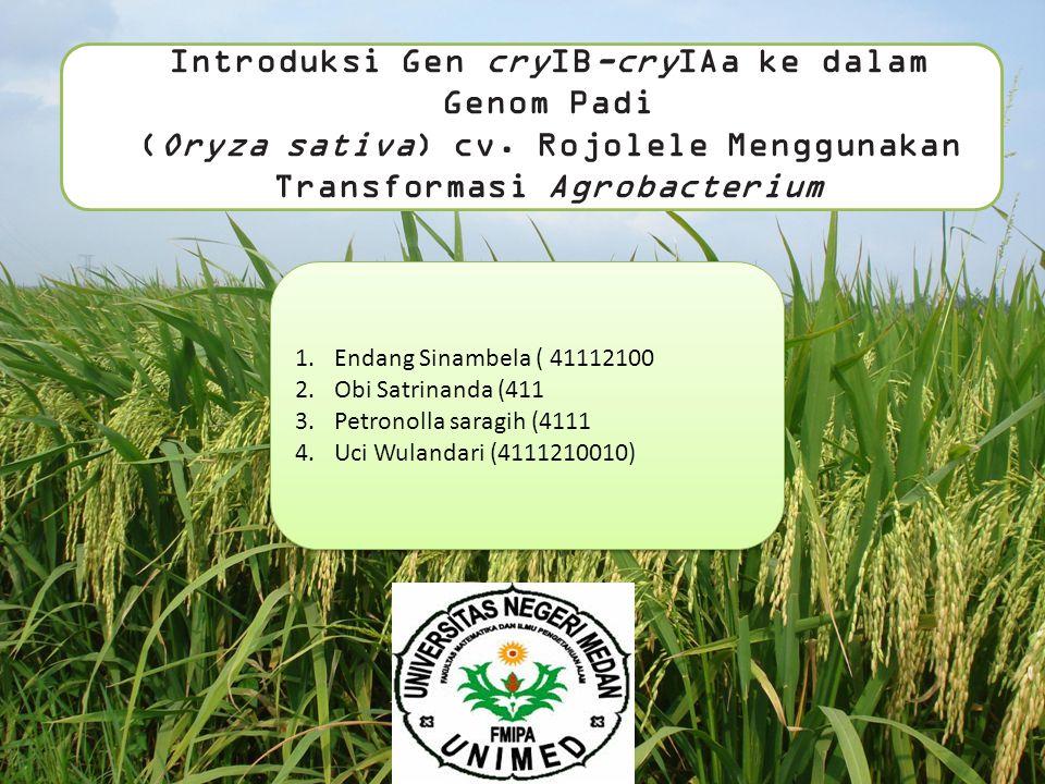 (Oryza sativa) cv. Rojolele Menggunakan Transformasi Agrobacterium