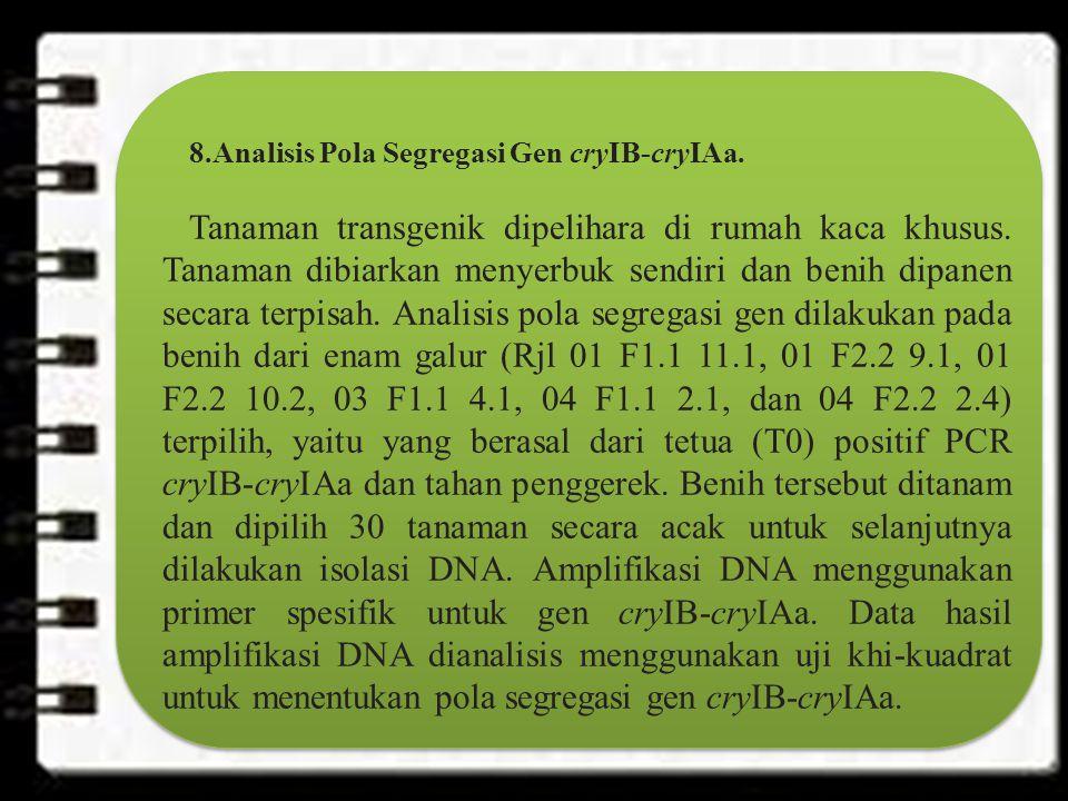 8.Analisis Pola Segregasi Gen cryIB-cryIAa.