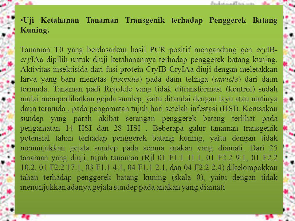 Uji Ketahanan Tanaman Transgenik terhadap Penggerek Batang Kuning.