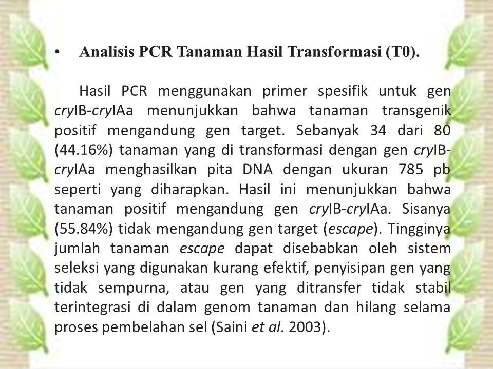 Analisis PCR Tanaman Hasil Transformasi (T0).