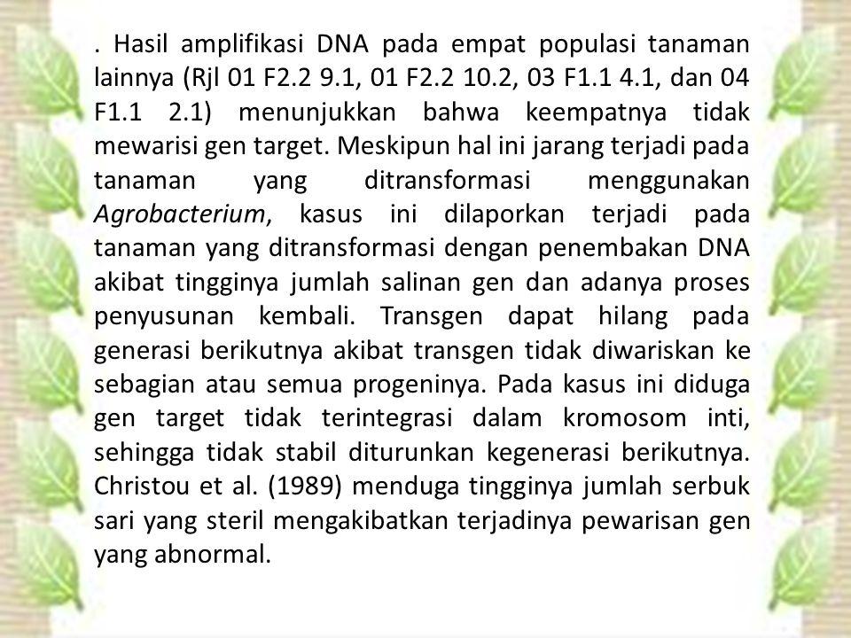 Hasil amplifikasi DNA pada empat populasi tanaman lainnya (Rjl 01 F2