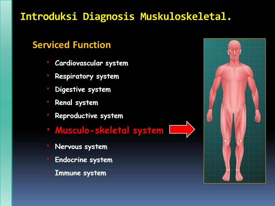 Introduksi Diagnosis Muskuloskeletal.