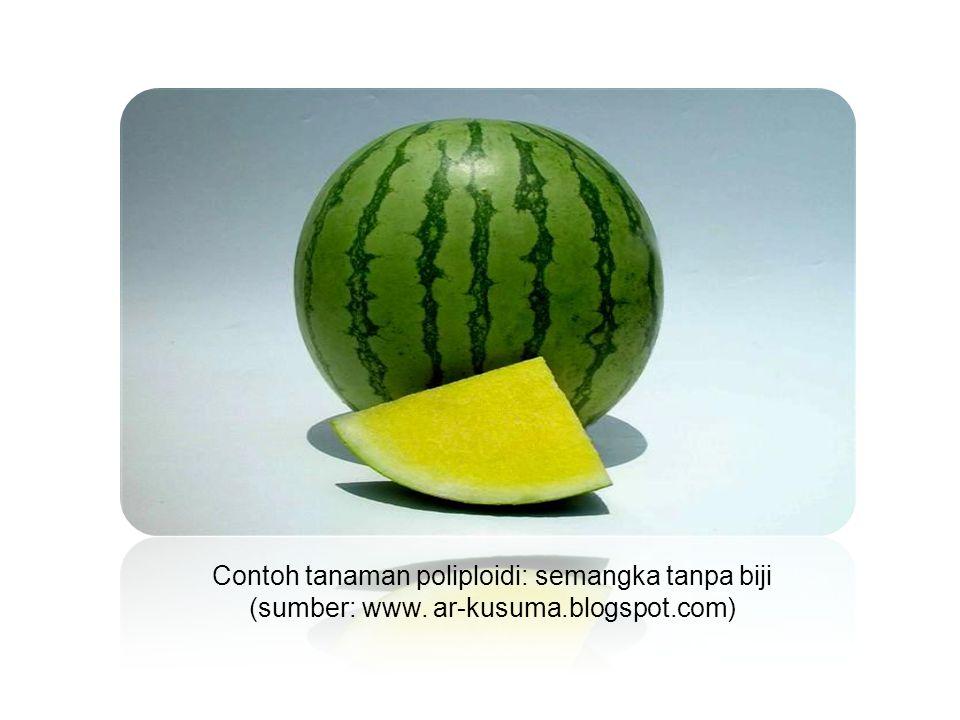 Contoh tanaman poliploidi: semangka tanpa biji