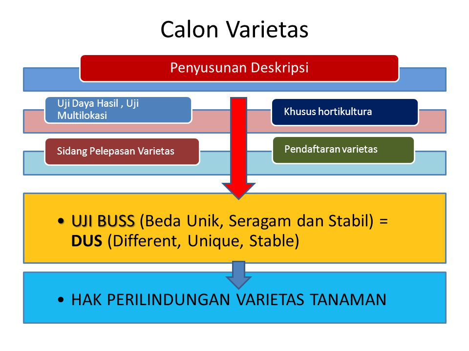 Calon Varietas Penyusunan Deskripsi. Uji Daya Hasil , Uji Multilokasi. Sidang Pelepasan Varietas.