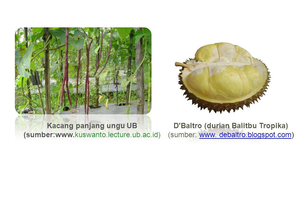 D Baltro (durian Balitbu Tropika)