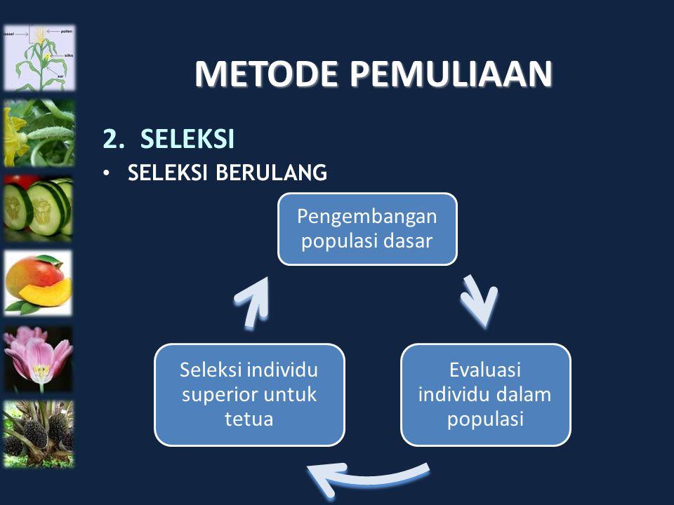 METODE PEMULIAAN SELEKSI SELEKSI BERULANG Pengembangan populasi dasar