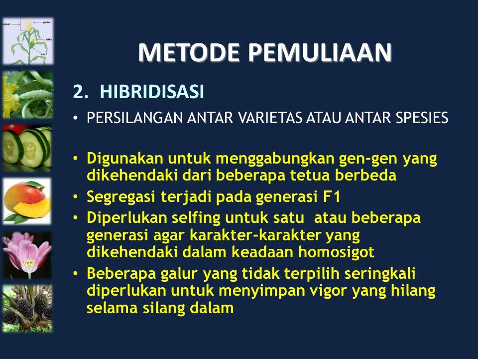METODE PEMULIAAN HIBRIDISASI