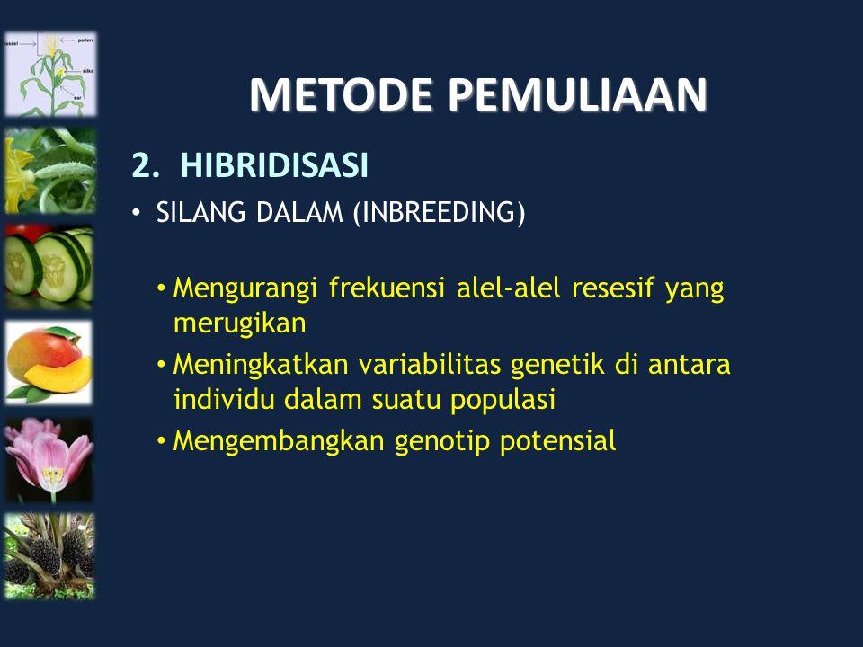 METODE PEMULIAAN HIBRIDISASI SILANG DALAM (INBREEDING)