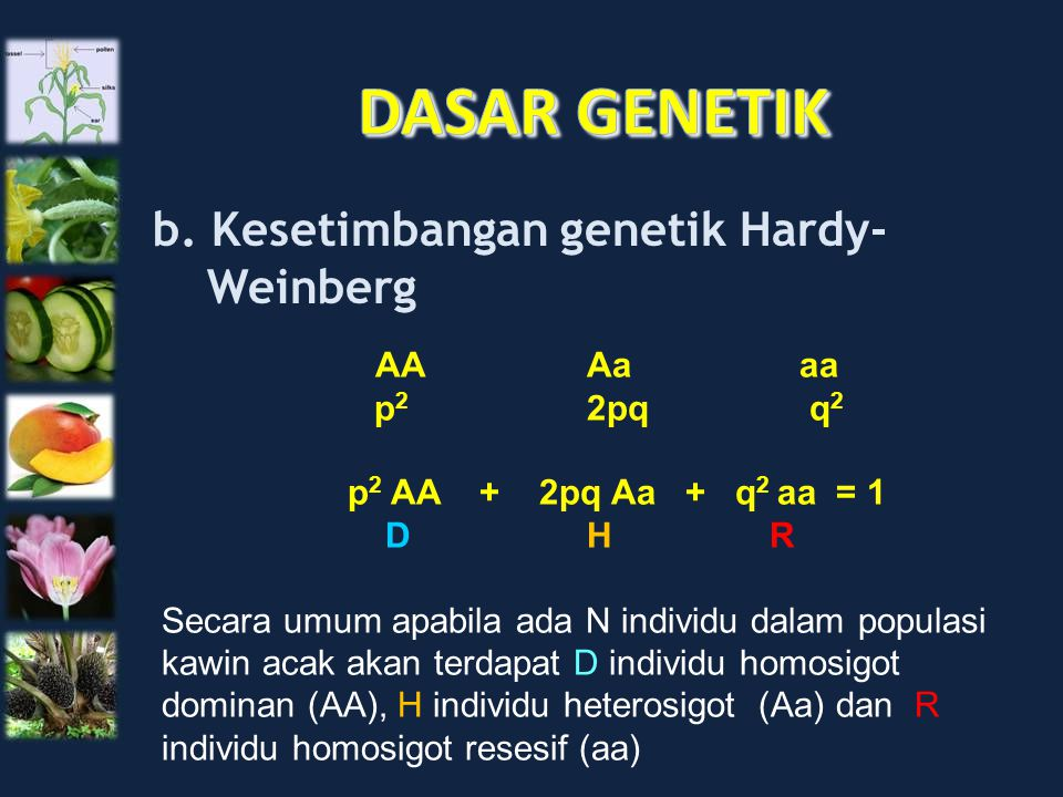 DASAR GENETIK b. Kesetimbangan genetik Hardy- Weinberg AA Aa aa