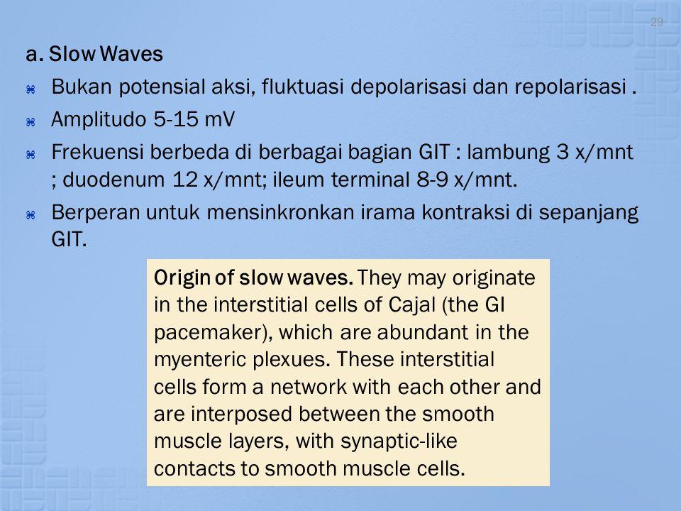a. Slow Waves Bukan potensial aksi, fluktuasi depolarisasi dan repolarisasi . Amplitudo 5-15 mV.