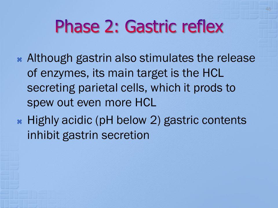 Phase 2: Gastric reflex