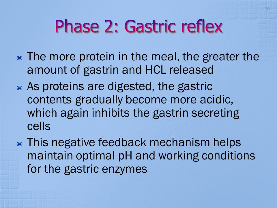 Phase 2: Gastric reflex The more protein in the meal, the greater the amount of gastrin and HCL released.