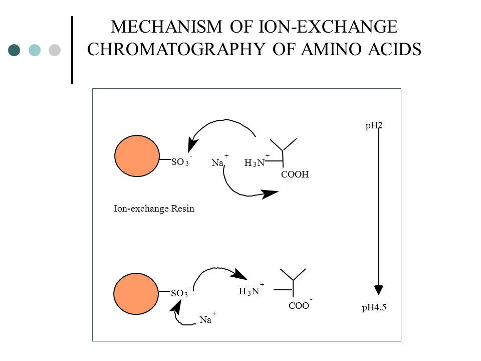 MECHANISM OF ION-EXCHANGE CHROMATOGRAPHY OF AMINO ACIDS