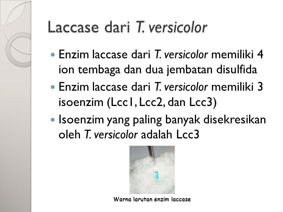 Laccase dari T. versicolor